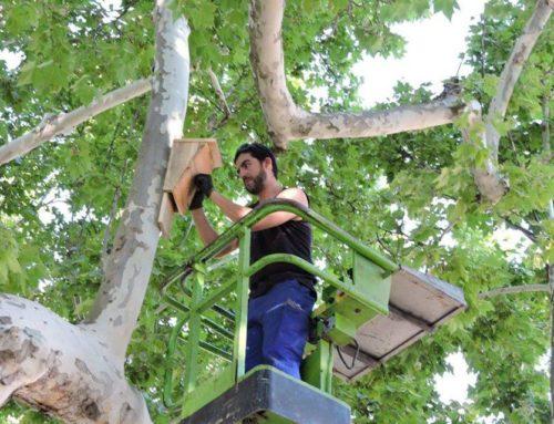 Programa de foment de la biodiversitat urbana a Montoliu de Lleida